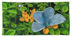 Common Blue On Bird's-foot Trefoil Beach Towel