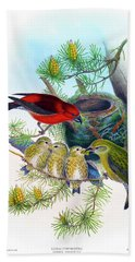 Common Crossbill Antique Bird Print John Gould Hc Richter Birds Of Great Britain  Beach Towel by Orchard Arts