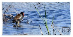 Common Gallinule Beach Towel by Gary Wightman