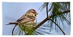 Beach Towel featuring the photograph Common Redpoll Bird by Christina Rollo