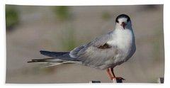 Common Tern Beach Sheet