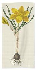 Common Yellow Crocus Beach Towel
