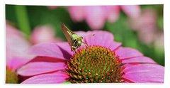 Coneflower Moth I Beach Sheet by Mary Haber