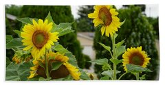 Conversing Sunflowers Beach Towel