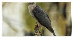 Cooper's Hawk Beach Towel