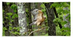 Coopers Hawk In New Hampshire Beach Sheet