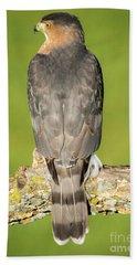 Cooper's Hawk In The Backyard Beach Sheet by Ricky L Jones