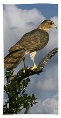 Cooper's Hawk On Watch Beach Towel