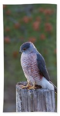Coopers Hawk Perched Beach Sheet