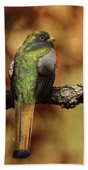 A Coppery-tailed Elegant Trogon Beach Towel