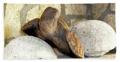 Beach Towel featuring the photograph Coral And Turtle Decor by Francesca Mackenney