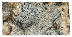 Beach Towel featuring the photograph Coral Fossil by Jean Noren