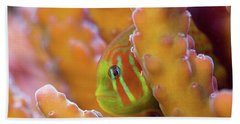 Coral Guardian Beach Towel