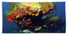 Coral Reef Scene, Calf Rock, Virgin Islands Beach Towel
