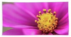 Beach Towel featuring the photograph Cosmos Pink Sensation by Sharon Mau