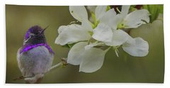 Costas Hummingbird On An Anacacho Orchid Branch Beach Towel