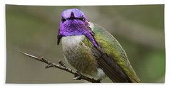 Costa's Hummingbird, Solano County California Beach Towel