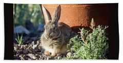Cottontail Rabbit In The Garden Beach Towel