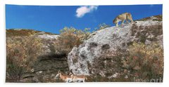 Cougar From Above Beach Towel by Walter Colvin