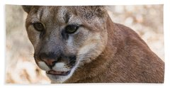 Cougar Portrait Beach Towel