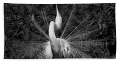 Great Egret Courtship Plumes Beach Towel