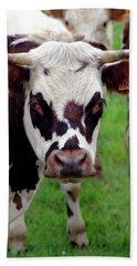Cow Closeup Beach Sheet