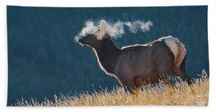 Cow Elk With Steamy Breath Beach Towel
