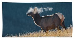Cow Elk With Steamy Breath Beach Towel