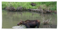 Beach Sheet featuring the photograph Cow Moose And Calf by James BO Insogna
