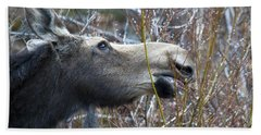 Cow Moose Dining On Willow Beach Towel