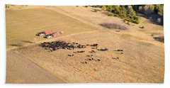 Cows And Trucks Beach Towel