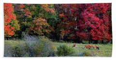 Cows In The Autumn Beach Towel by Nancy Griswold
