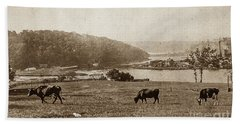 Beach Sheet featuring the photograph Cows On Baker Field by Cole Thompson