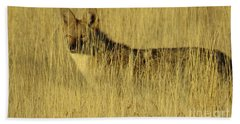 Coyote 4 Beach Towel