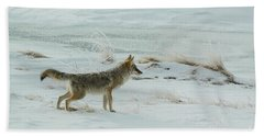 Coyote - 8962 Beach Sheet