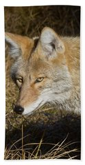 Coyote In The Wild Beach Towel