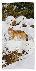Coyote On Snowy Hill Beach Towel by Steve McKinzie