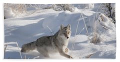 Coyote On The Move Beach Towel