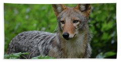 Coyote On The Prowl  Beach Towel