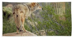 Coyote Beach Towel by Tam Ryan