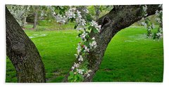 Crabapple Blossoms On A Rainy Spring Day Beach Towel