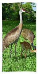 Crane Family Picnic Beach Sheet