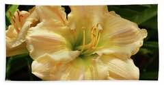 Beach Sheet featuring the photograph Cream Daylily by Sandy Keeton