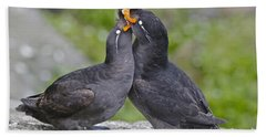 Crested Auklet Pair Beach Towel