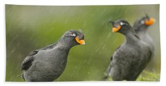 Crested Auklets Beach Towel