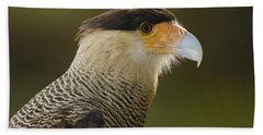 Crested Caracara Polyborus Plancus Beach Sheet by Pete Oxford