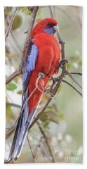 Crimson Rosella 01 Beach Sheet