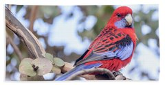 Crimson Rosella 03 Beach Sheet