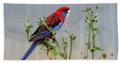 Crimson Rosella Beach Sheet
