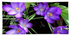 Crocus First To Bloom Beach Towel by Tara Hutton
